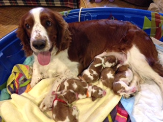 Molly with puppies