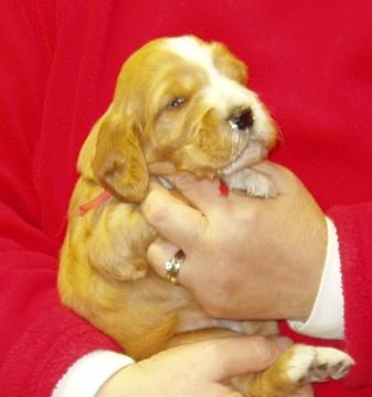 Trixie 1 - 3 weeks