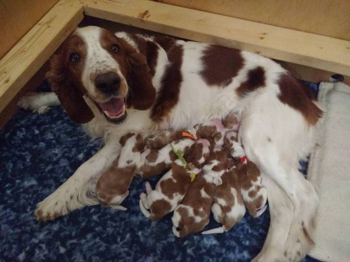 Dilly's second litter 4 days old