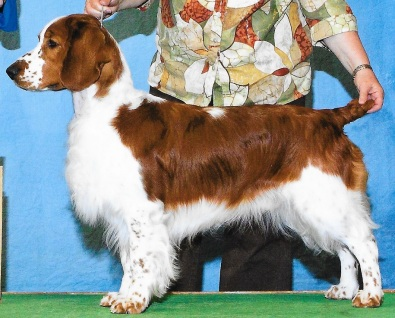 PUPPIES AVAILABLE « Fox River Spaniels